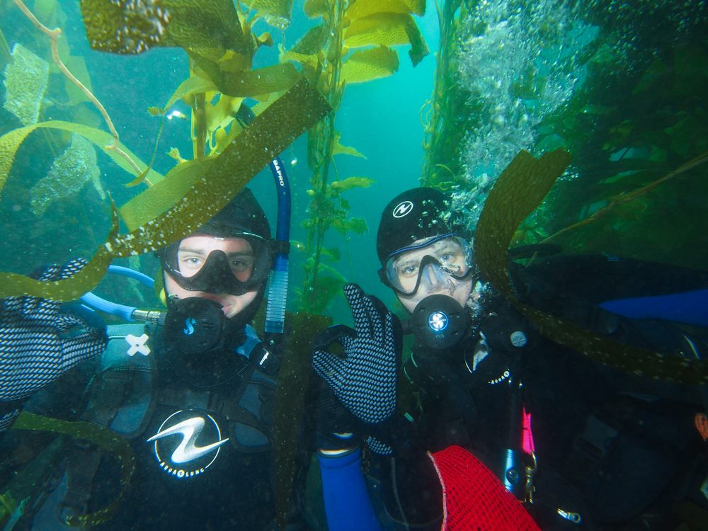 Diving in the kelp forest at Santa Cruz Island.