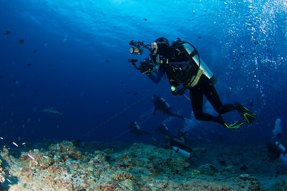 <font size=2 font color=black>The strong currents in Palau require divers to utilize reef hooks to enjoy underwater photography with ease on this dynamic reef.</font>