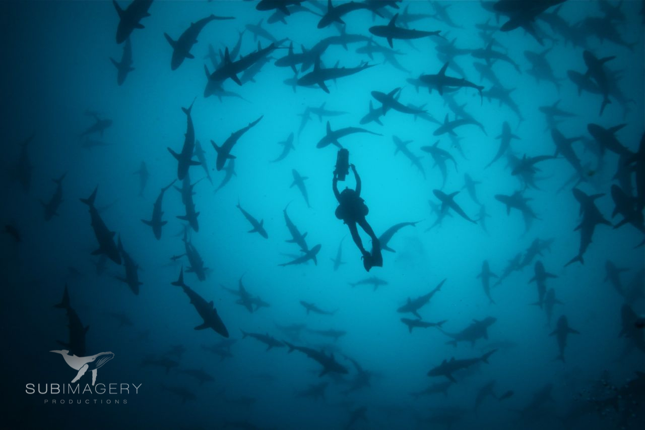 Malpelo Island, Colombia Dive Expedition 2020