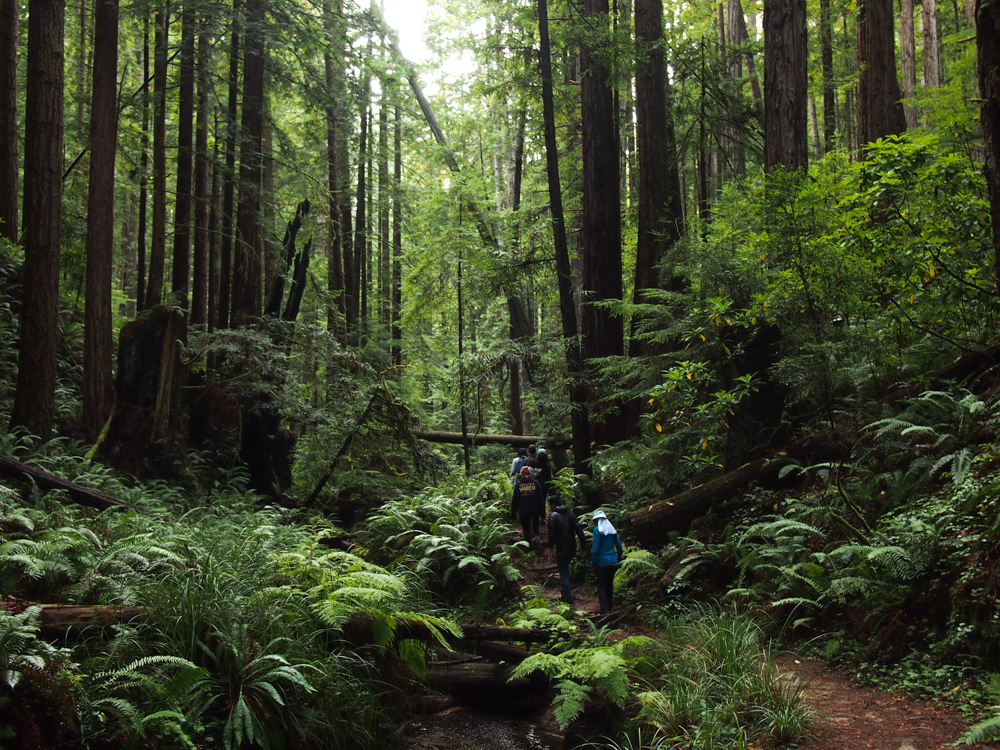Northern California Camp/Dive/Eco Adventure: Fall 2019
