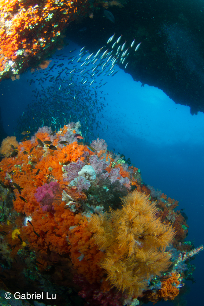 Ocean safari scuba upcoming overseas trips the best of philippines and okinawa diving eco - Best dive trips ...