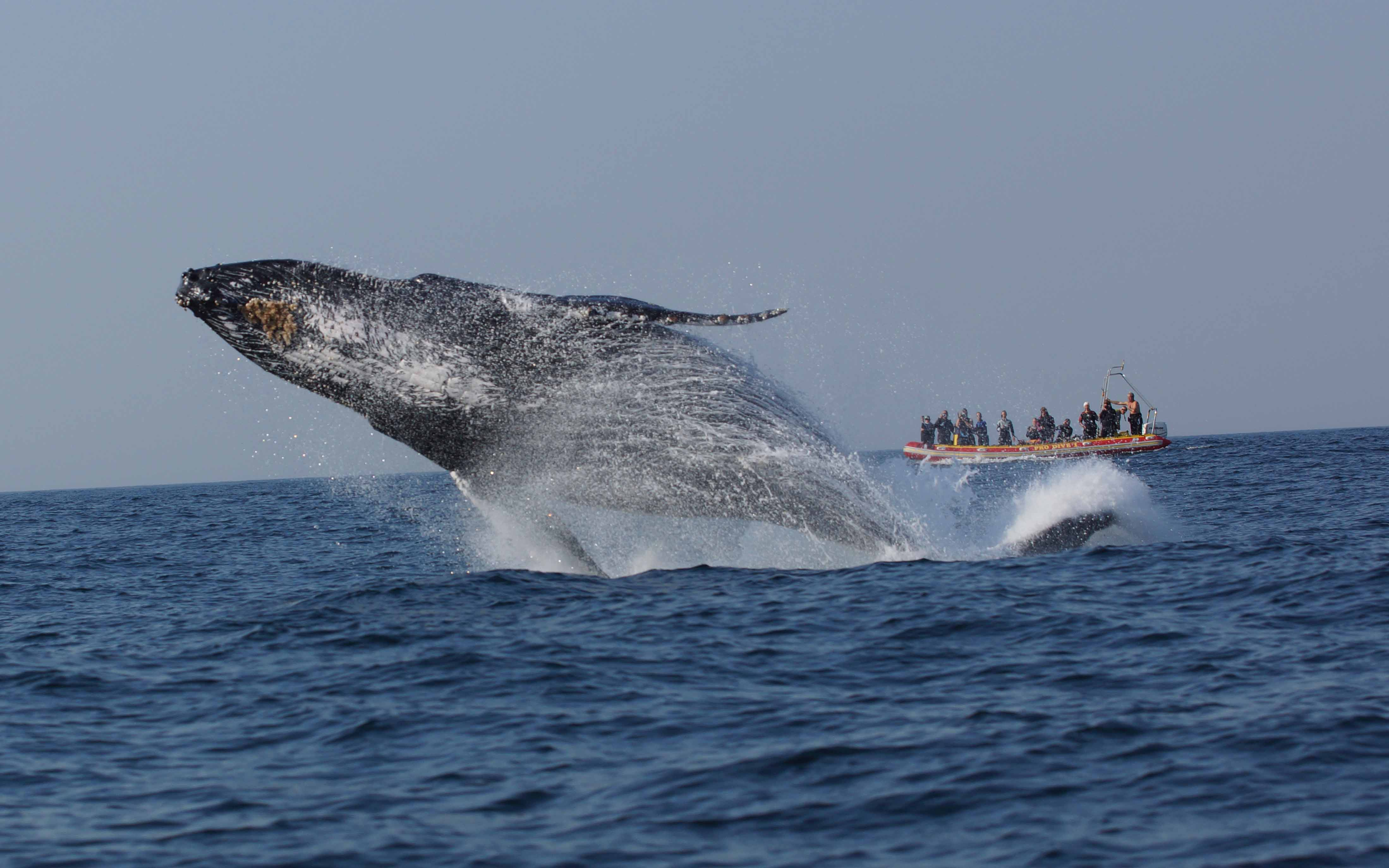 South Africa Sardine Run and Big 5 Safari, Diving & Eco Expedition 2021