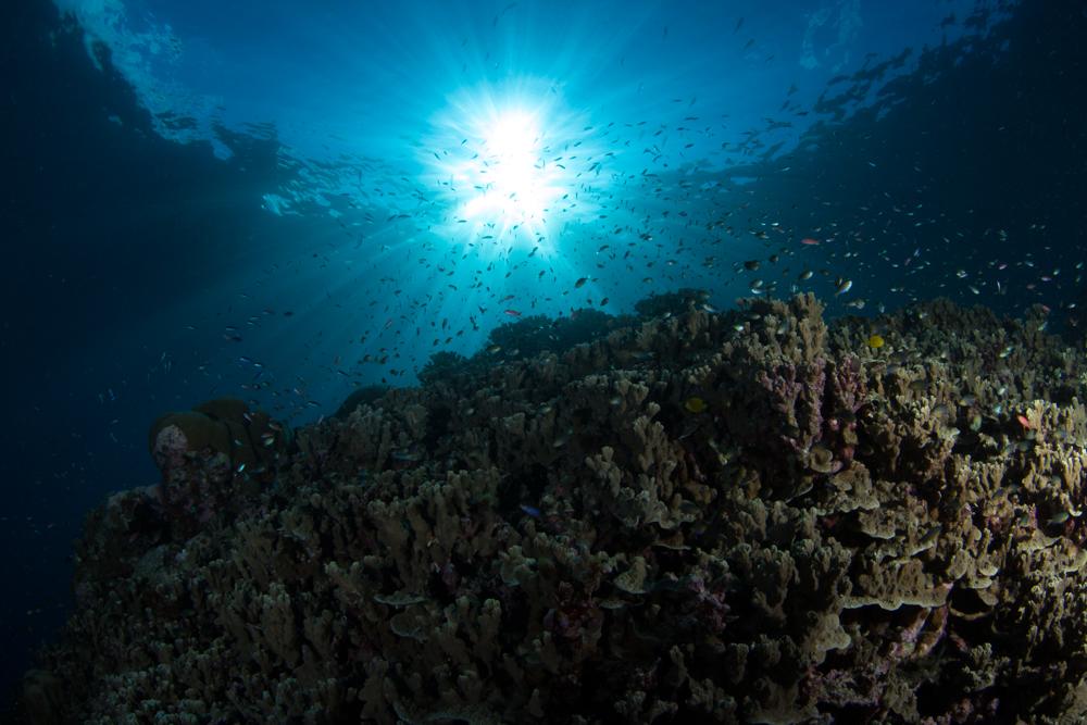 American Sea Plane Wreckage in the Solomon Islands 2018