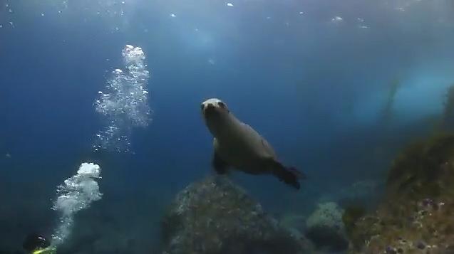 Sunday Morning Dive Santa Barbara Island October 6th 2013