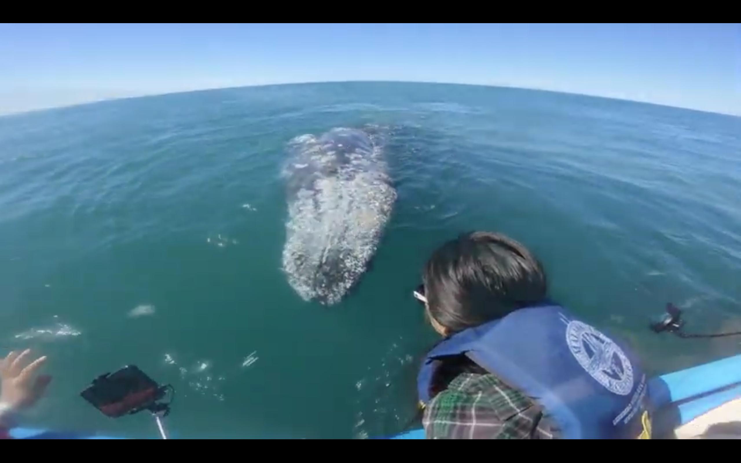 A Whale of a Tale - Baja California Adventure