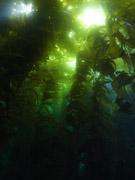 Ocean Safari Scuba Diving