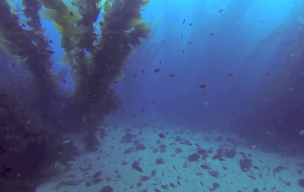 Channel Is. diving I