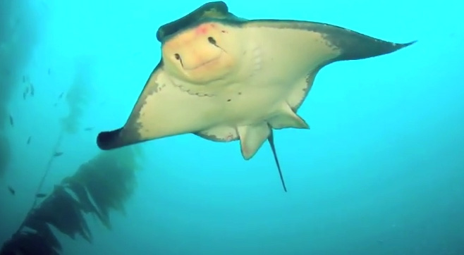 Channel Islands: Sea creatures and more!